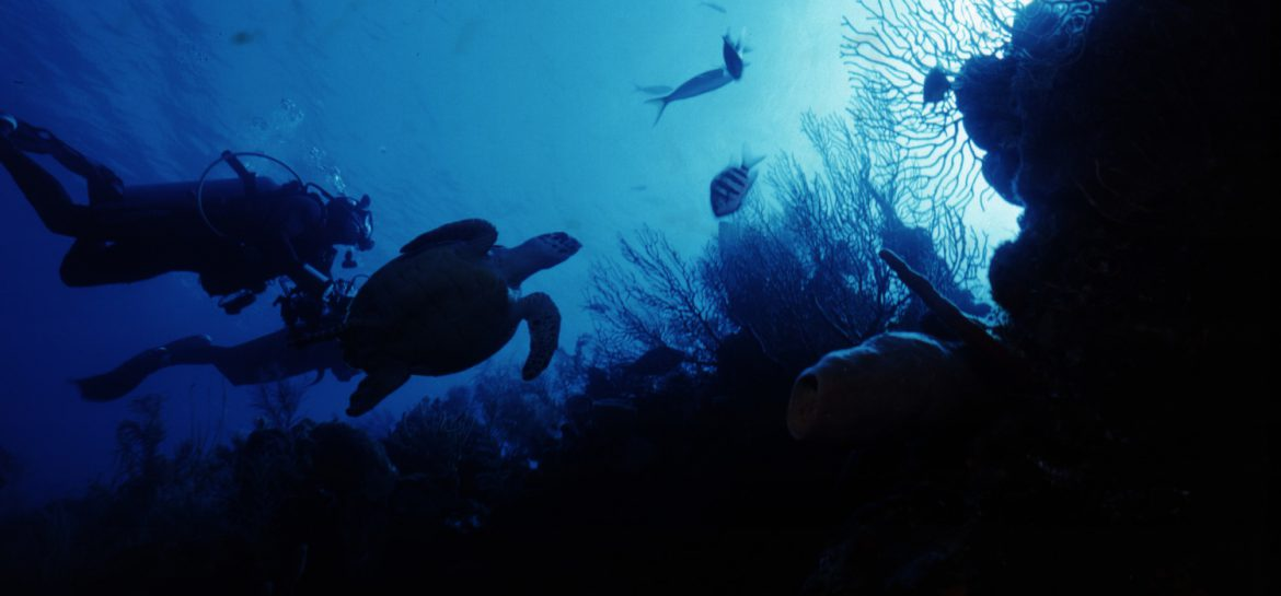 diving spots in the mediterranean