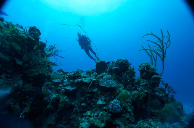 Andros Island coral reef bahamas