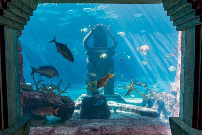 Paradise Island Aquarium Bahamas
