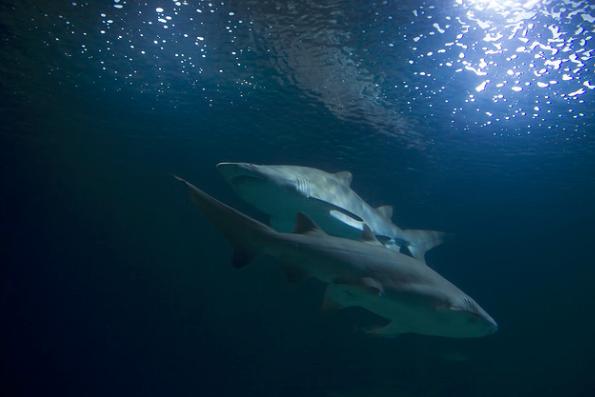shark watching Seychelles yacht trip
